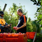 What do growers want from SWP?
