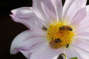 Heard the buzz about Bee Friendly Farming®?