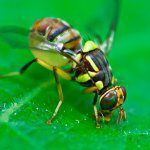 New toolkit makes biosecurity a breeze
