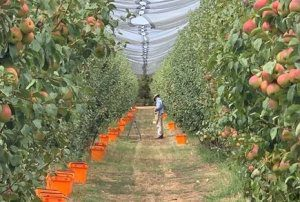 Netting and orchard adaptation for future climates