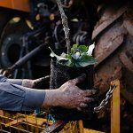 Container-grown trees 'better from the start' says WA grower